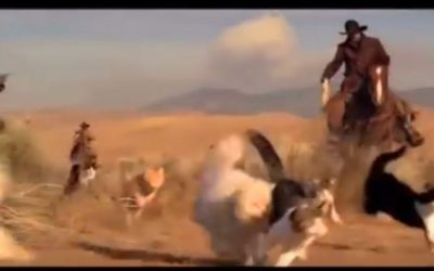 Herding Cats – Mom Said There Would Be Days Like These!